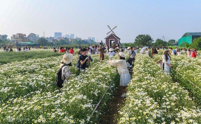 Khách đổ đến Nhật Tân chụp ảnh cúc hoạ mi