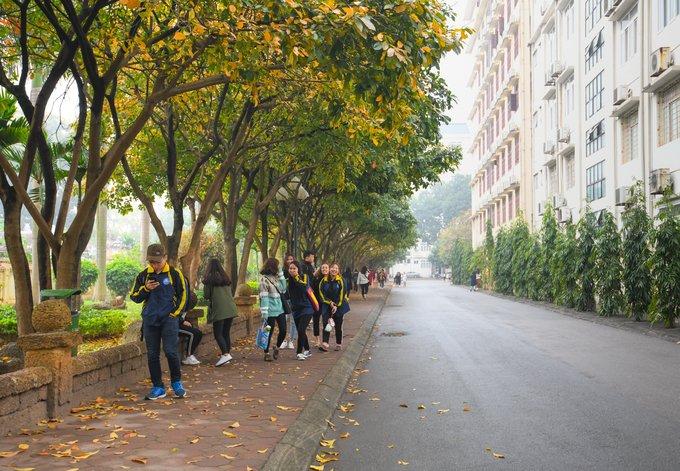 Hàng lộc vừng trong khuôn viên Đại học Quốc gia Hà Nội. Bạn Thư, sinh viên khoa tiếng Anh, Đại học Ngoại ngữ, cho biết: