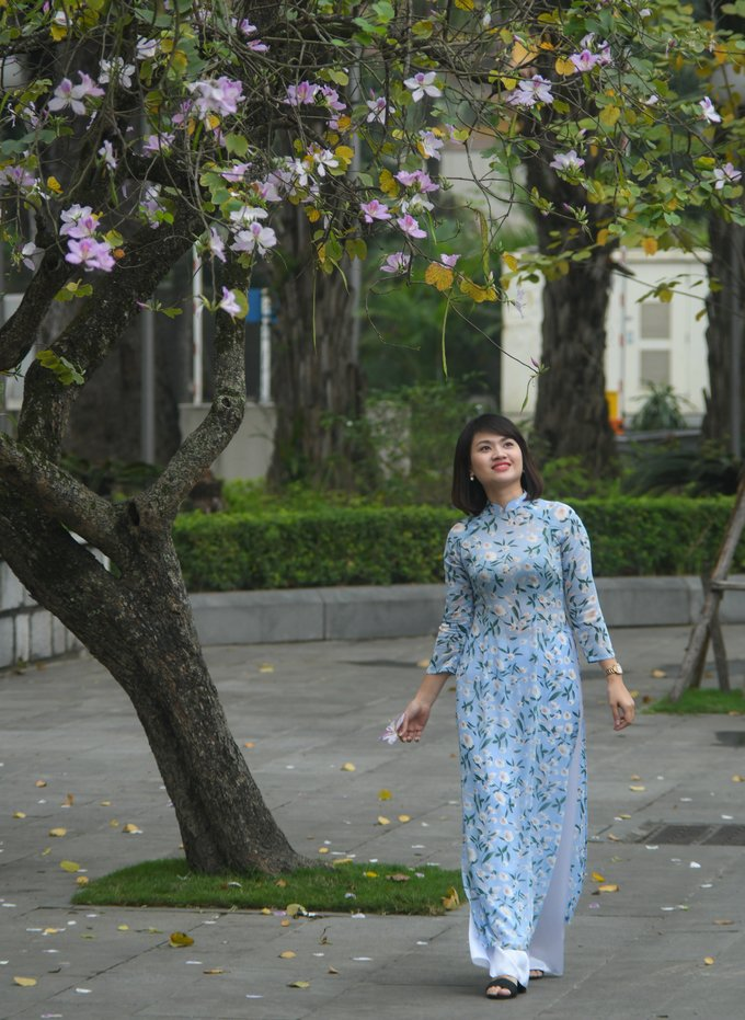 Hoa ban xuất hiện tại Hà Nội từ đầu thập niên 1960. Các nhà quy hoạch đô thị khi đó đã cho trồng thử cây này trên một số tuyến đường, công viên, hồ Hoàn Kiếm.