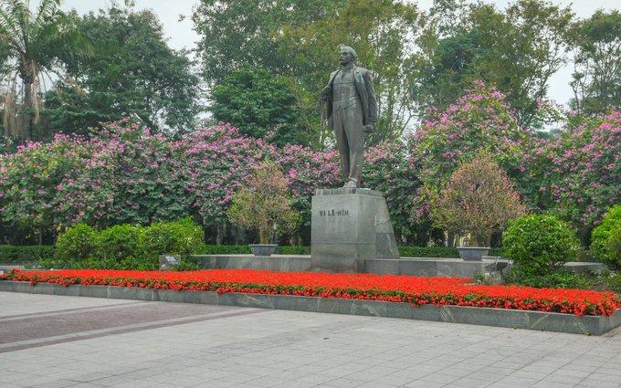 Ở công viên Lenin có hàng chục cây nằm cạnh nhau cùng bung sắc tím.
