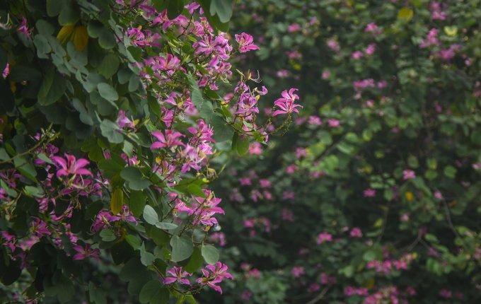 Những cây hoa mới được trồng đem lại sự sinh động và lãng mạn cho Hà Nội trong những ngày mưa rét.