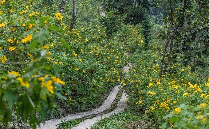 Một góc đồi hoa dã quỳ ở khu vực coste 400, nằm cách rừng thông khoảng 200 m. Đồi dã quỳ tại đây có diện tích hơn 10 ha, là điểm tham quan chính của khu du lịch. Du khách có thể đi theo những đường mòn đi bộ có tổng chiều dài khoảng 3 km để nhìn ngắm toàn bộ khu rừng trong mùa hoa.