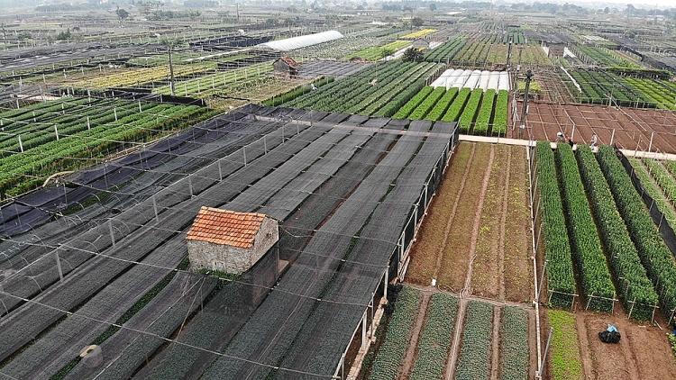 Làng hoa Tây Tựu nổi tiếng từ lâu, chuyên trồng và cung cấp các loại hoa cho thị trường Hà Nội và vùng lân cận.