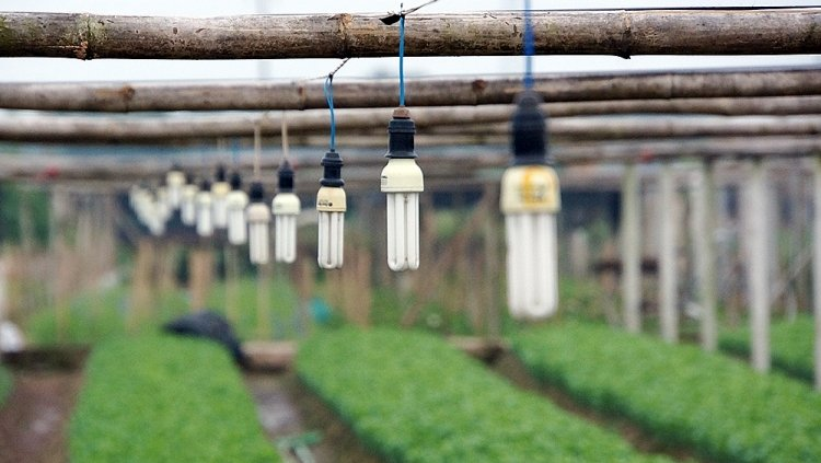 Trang bị đèn để cung cấp thêm ánh sáng cho hoa