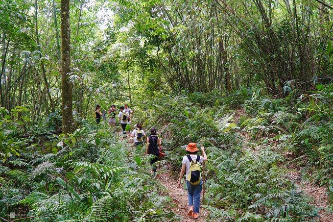 Chuyến đi bộ khám phá rừng Ba Vì kéo dài 2 - 4 tiếng thích hợp với những người thích trekking mà không thể đi xa Hà Nội. Bạn sẽ đi theo những lối mòn băng qua rừng nguyên sinh rậm rạp, hay rừng trúc cao vút. Tuyến dễ đi nhất bắt đầu từ Cốt 600 hướng xuống Cốt 300, kéo dài hơn 2 giờ.